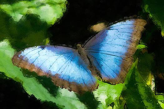 Flutterbye by Rebecca Fry