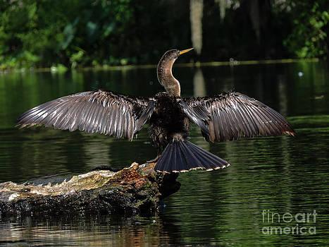 Fly Away by Denise Ellis