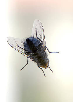 Fly... by Ckworkshop