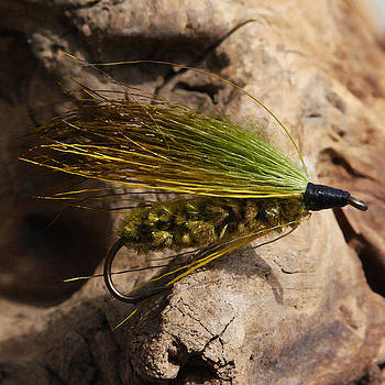 Fly Fishing  by Jennifer Muller