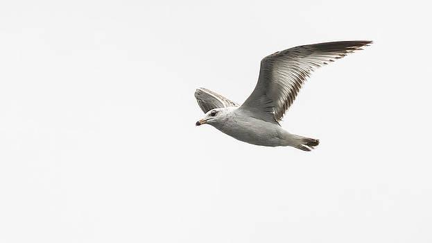 Fly Free by Garett Gabriel