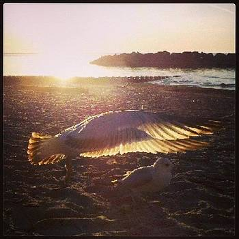 Fly Like A Bird by Ashley Flowers