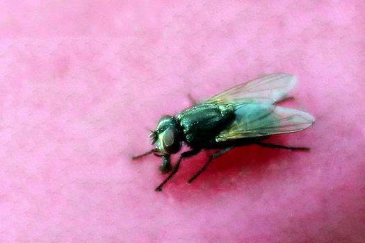 Fly by Mo  Khalel