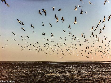 Fly to the Sun by Kornrawiee Miu Miu
