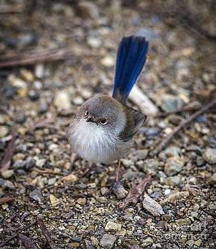Russ Brown - Flycatcher