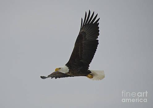 Flying away...  by Nicole Markmann Nelson