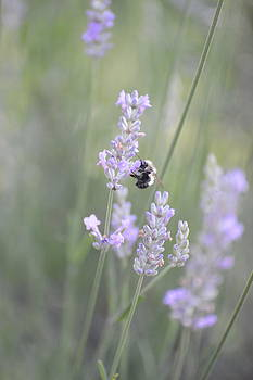Flying Bumblebee II by Teresa Tilley