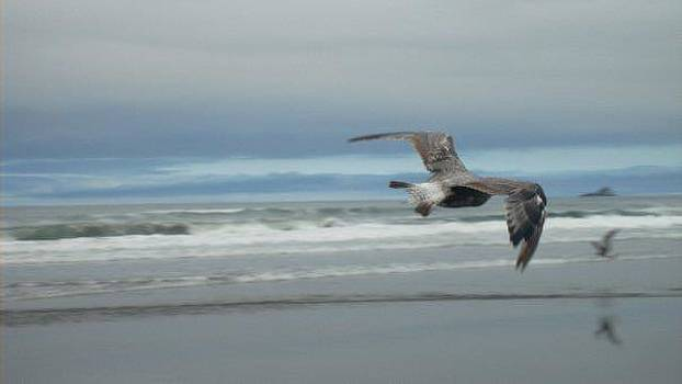 Flying By by Misty Ann Brewer