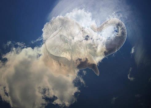 Flying Elephant  by Cindy Greenstein