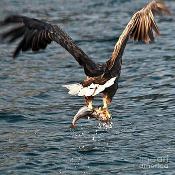 Heiko Koehrer-Wagner - Flying European Sea Eagle 3
