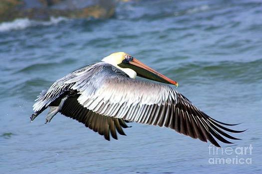 Nick Gustafson - Flying Florida Pelican