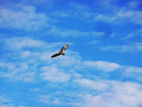 Flying High by Harry Emery