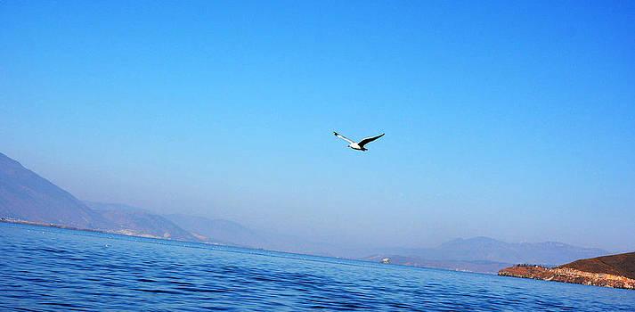 Flying Horizontally by Qiana Pang