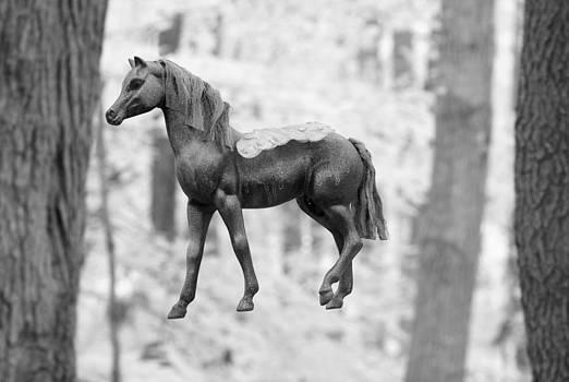 John Cardamone - Flying Horse