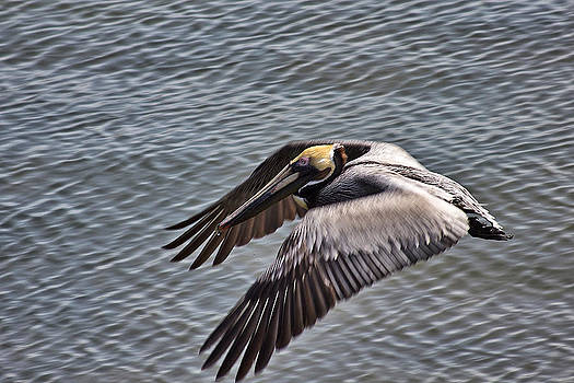 Flying Low 3 by Phil Mancuso
