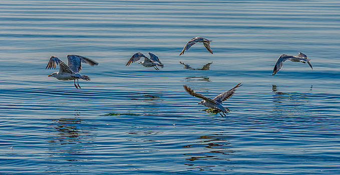 Flying Low by Todd Heckert