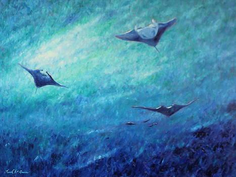 Flying Manta Rays by Daniel W Green