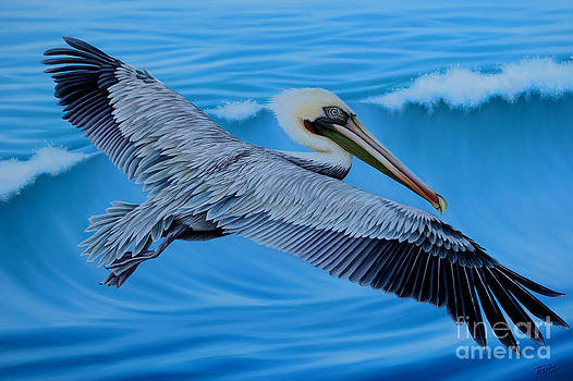 Flying Pelican by Tish Wynne