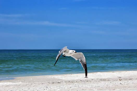 Flying Seagull by George Ferreira