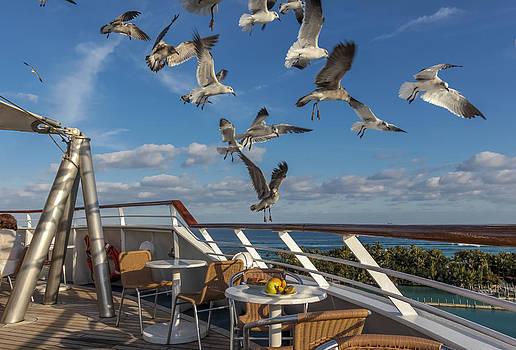 Flying seagull in Bahamas by Jianghui Zhang