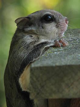 Dale Kauzlaric - Flying Squirrel