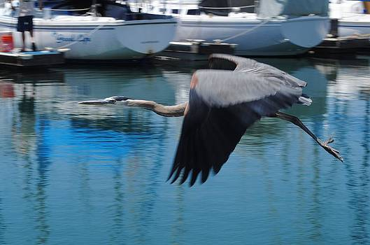Flying Thru the Marina by Jill Baum