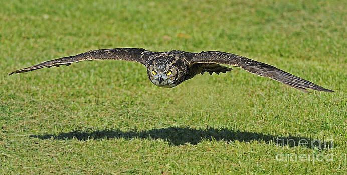 Nina Stavlund - Flying Tiger...