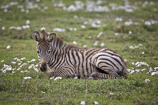 Foal and flowers by Sandy Schepis