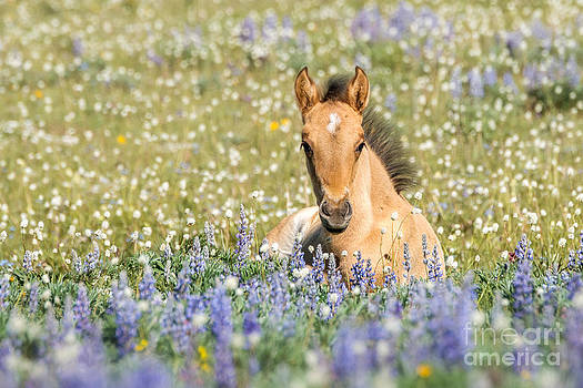 Foal and WildFlowers by Heather Swan