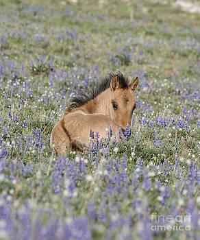 Foal in the Lupine by Carol Walker