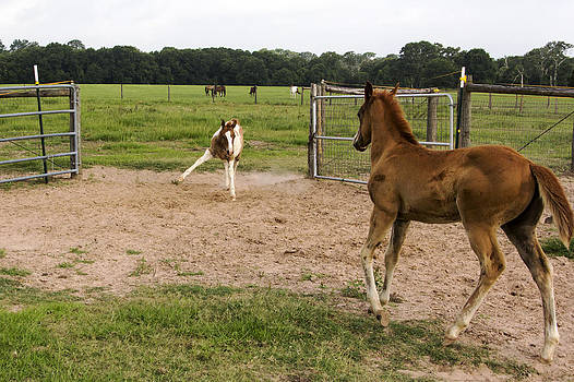 Foals at Play by Dana Moyer