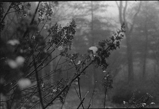 Fog by Alexa  Barry