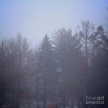 Fog and Mist by Frank J Casella