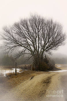 Fog And Snow by Barbara Dean