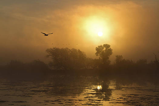 Fog And Sun by Gary  Drinkhorn