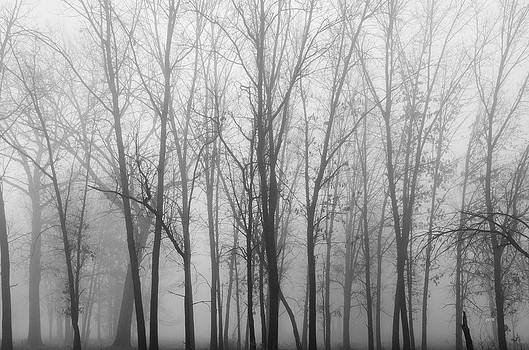 Fog and Trees 4 by James Blackwell JR