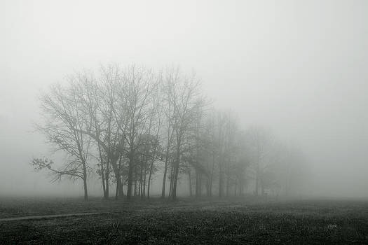Fog and Trees3 by James Blackwell JR