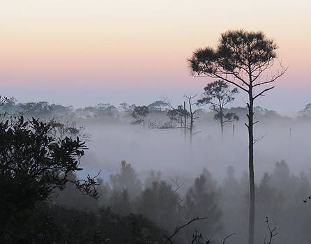 Fog at Dawn by Kent Dunning