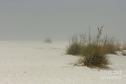 Fog Covered Beach by Cindi Ressler