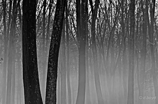 Fog in the Dark Forest by Diana Boyd