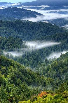 Fog in the Santa Cruz Mountains by Lisa Chorny