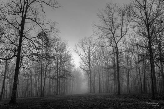 Fog in the Woods by Greg Weseman