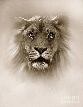 Fog King Lion by Robert Foster