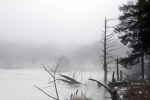 Fog On The Beaver Pond by David Simons