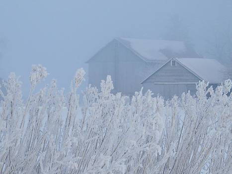 Fog on the Farm by Lori Frisch