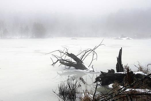 Fog On The Pond by David Simons