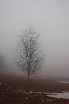 Fog by Tom Atkins