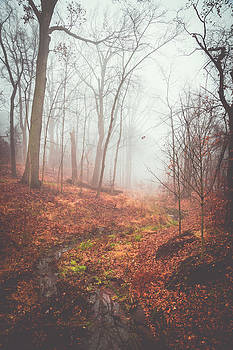 Foggy Creek Bed by Theodore Lewis