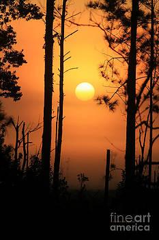 Deborah Benoit - Foggy Day Sunrise