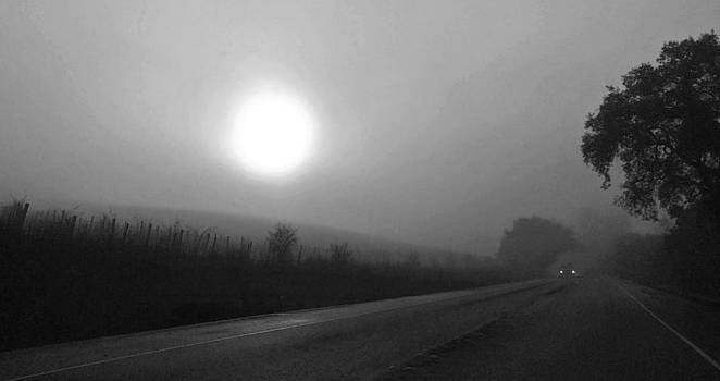 Foggy Drive by a Vineyard by Richard Hinds